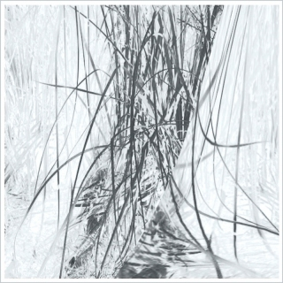 in-the-reeds3